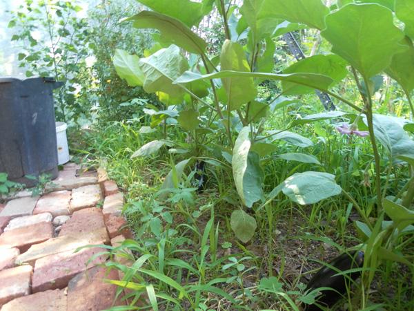 Invernadero. Diseño permacultura Can Pou