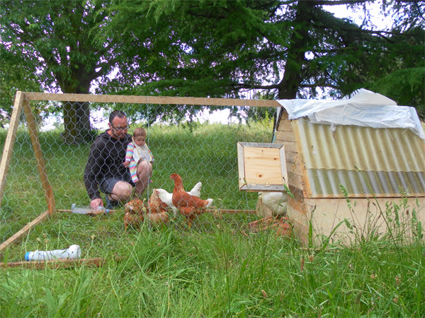 gallinas en Can Pou